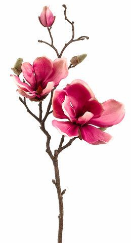 Magnolia Fake Branch In Pink 19 Flower Drawing Flower Painting Flower Art