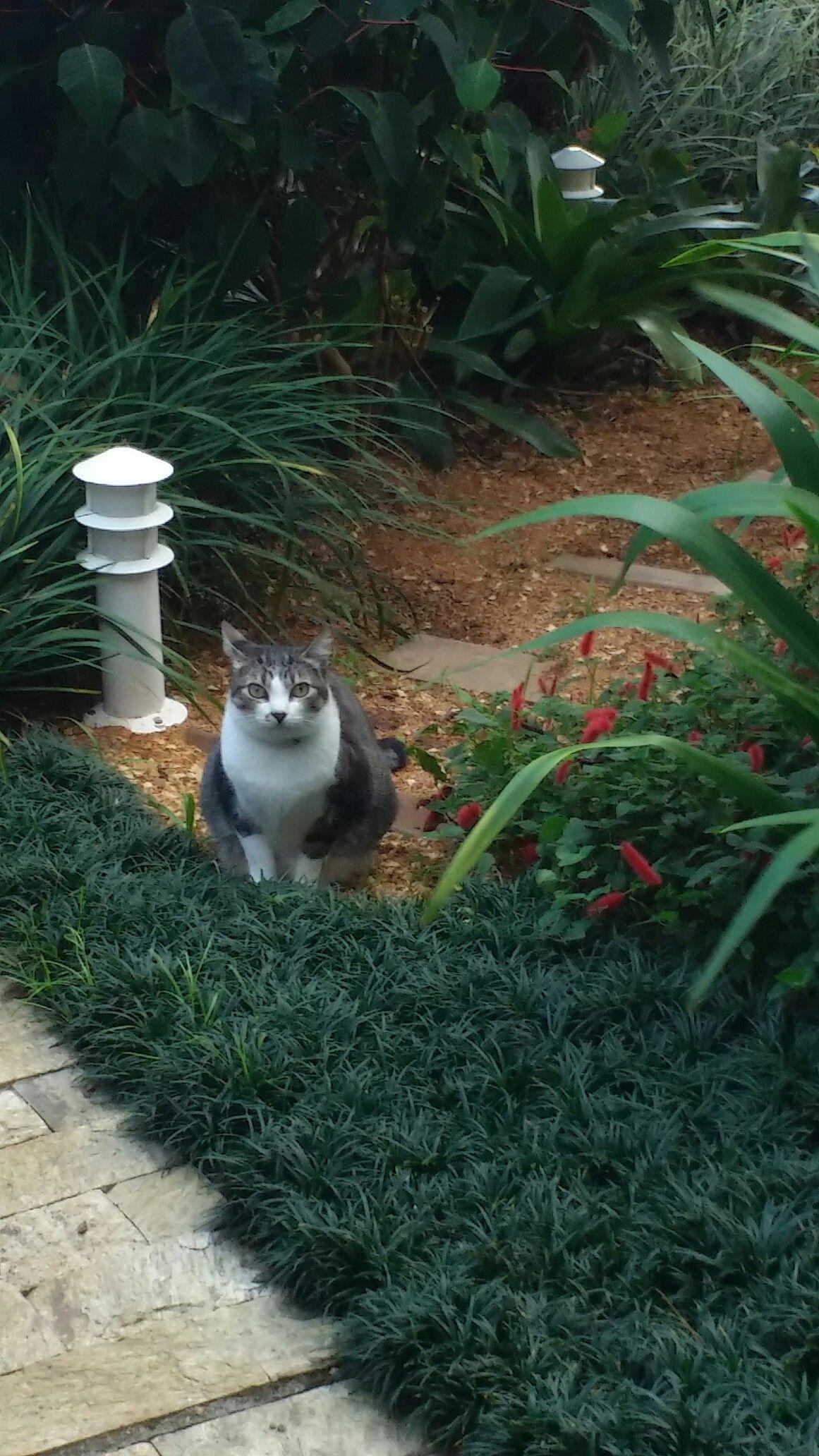 Uma gatinha veio visitar o meu jardim, adorei a surpresa!