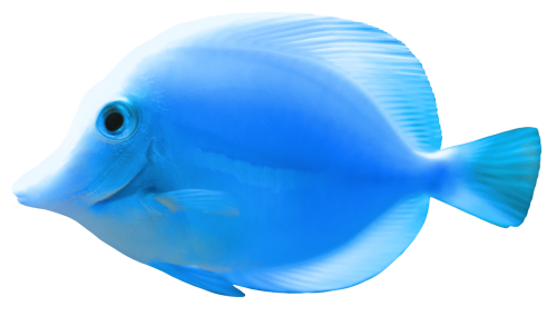 Blue Fish Png Clipart Photography Deals Fish Gif Art Images