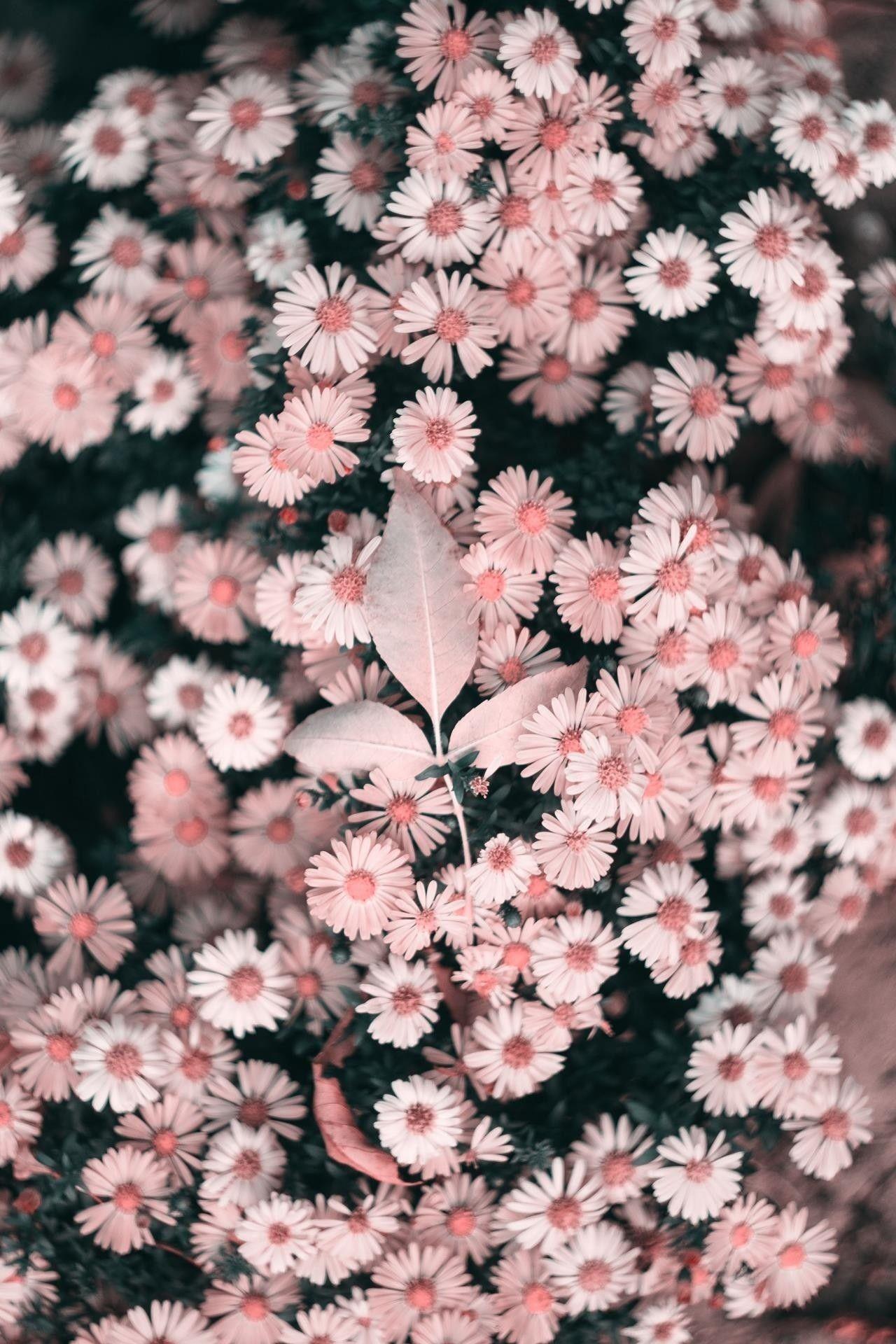 Pin Oleh Cahya Cy Di Wallpaper Wallpaper Bunga Matahari Wallpaper Alam Fotografi Bunga