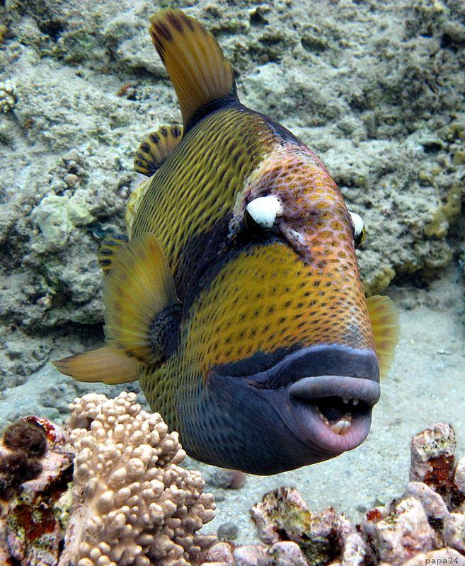 Подводный мир Красного моря. Обсуждение на LiveInternet - Российский Сервис…
