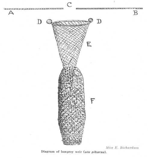 Utu Piharau Lamprey Maori Diagram