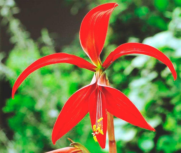 Flor de lis | later | Pinterest | Flor de lis, La flor de lis y Flor