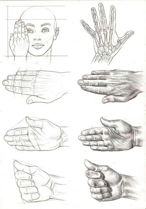 Hand study | A R T | How to draw hands, Art sketches ...
