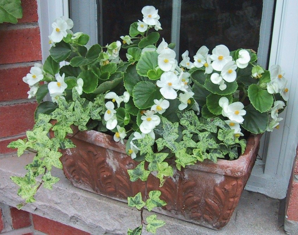 Pin By Linda Bare On Garden Ideas Container Flowers Container Gardening Flowers Planter Pots Outdoor