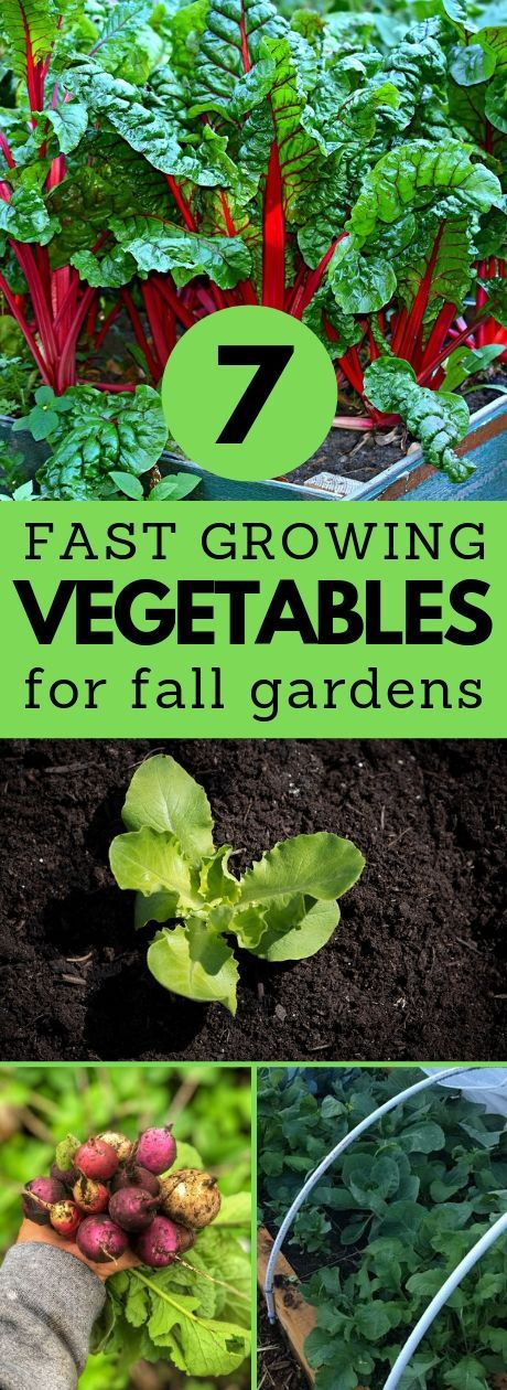 It S Not Too Late To Plant A Fall Garden Even If You Re A 640 x 480