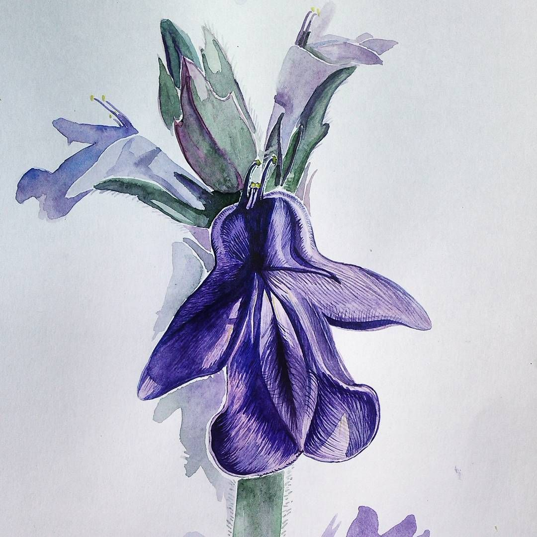 Botanicheskaya Akvarel Krupno Kolyuchka Polzuchaya Artwork Abstract Artwork Abstract