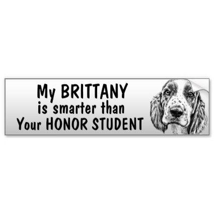 Brittany Spaniel Smarter Than Student Funny Bumper Sticker