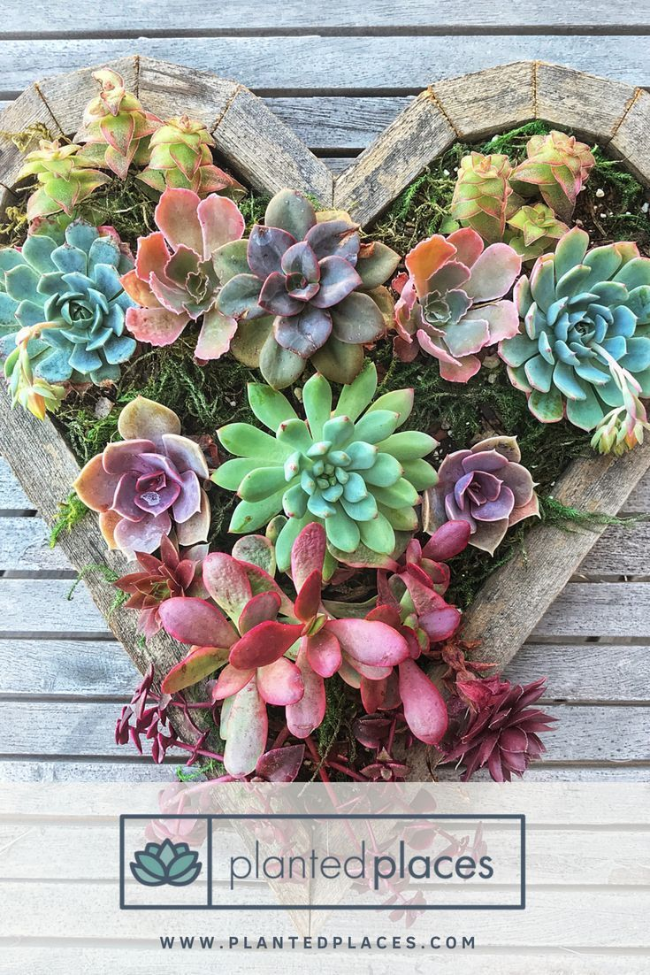 Planted places sells heart succulent planter kits perfect for a diy