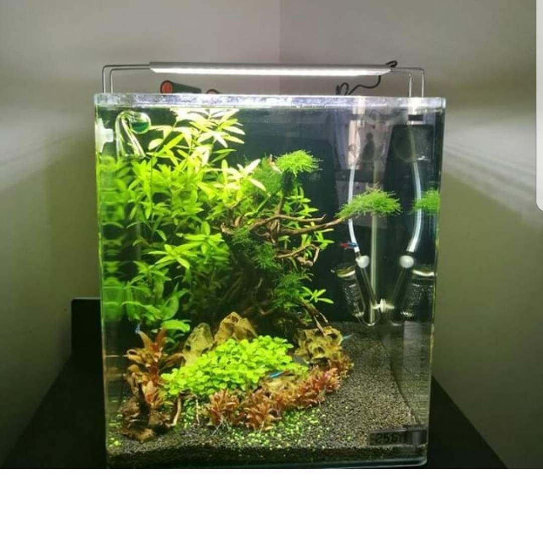 You donut need a big aquarium to create something wonderful like