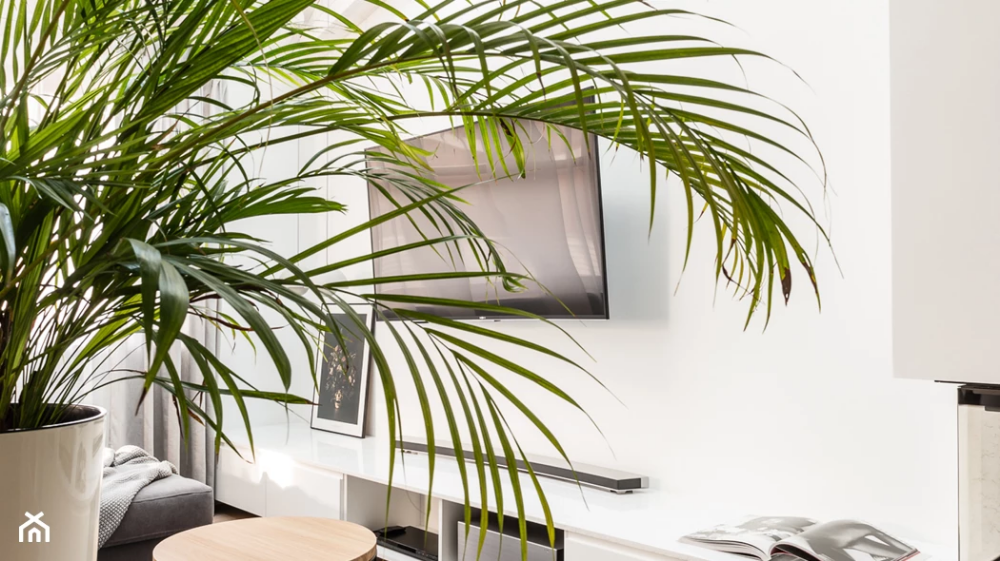 Trendy 2019 Duze Kwiaty Doniczkowe Homebook Room Living Room Plants