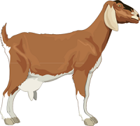 Pin By My Biology Paige On Genetics Goat Picture Cartoon Animals Animal Illustration