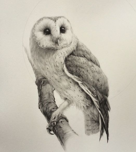 Pin by TheZdog20 on Birds | Owls drawing, Barn owl drawing ...