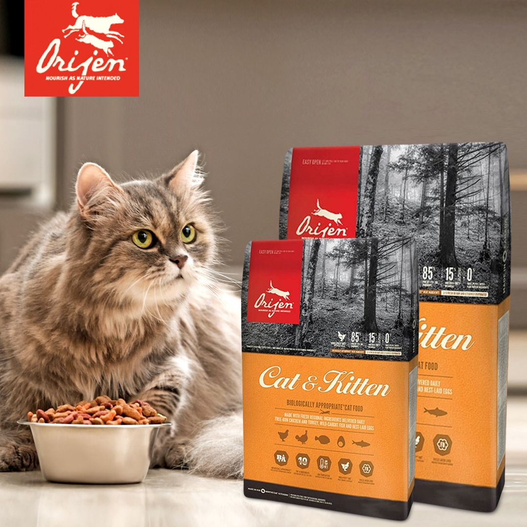Looking For The Best Cat Food In 2020 Best Cat Food Dry Cat Food Cat Food