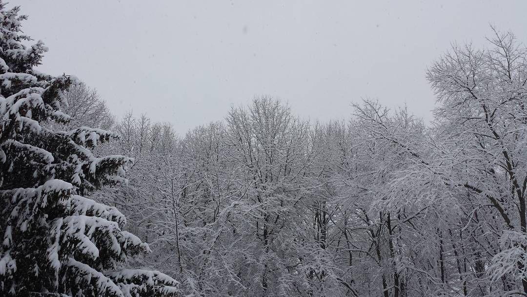 #Blizzard2016 by thisismeheatherenee