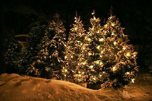 Pin by Padie King on Christmas | Real christmas tree ...
