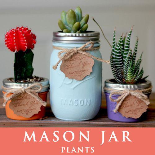 メイソンジャー 多肉植物 サボテン Ball Mason jar メイソンジャー レギュラーマウス 4oz+16oz メイソンジャープランツ 植物 ギフト 3個セット