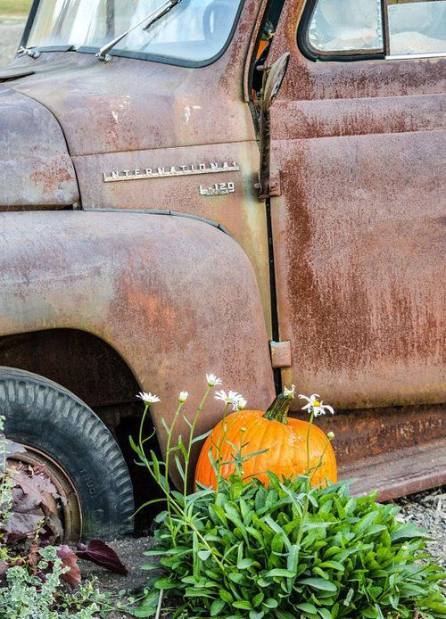 Pin by Kitty on Fall in 2020 Fall pumpkins, Vintage