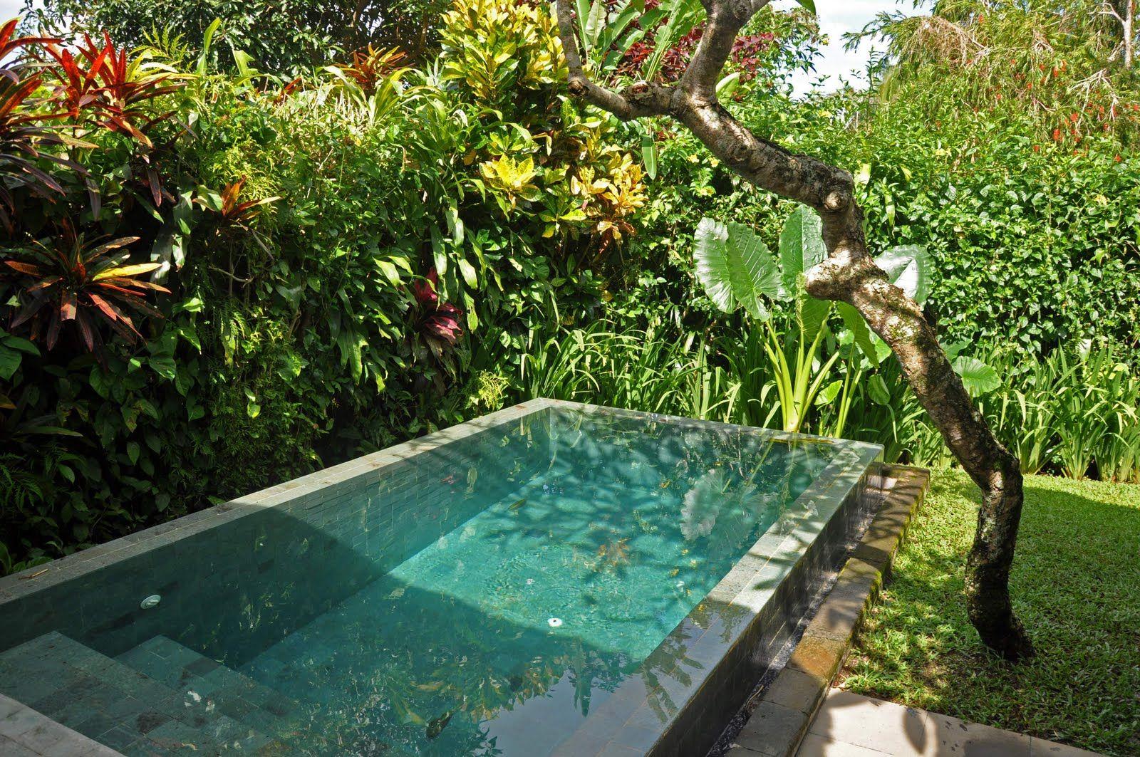 Small Garden Plunge Pool Google Search Backyard Porch Tropical Landscaping Garden Pool