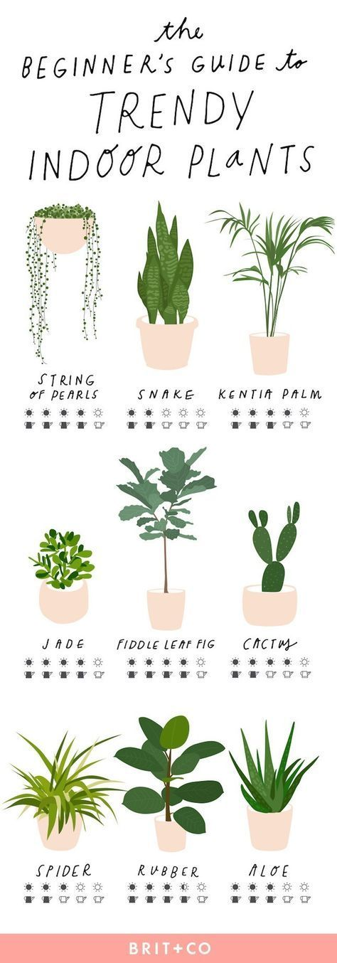 Photo of The Beginner's Guide to Trendy Indoor Plants