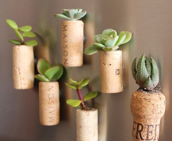 Cool DIY Gift Idea for Plant, Wine Lovers: Plants Grow in Fridge ...