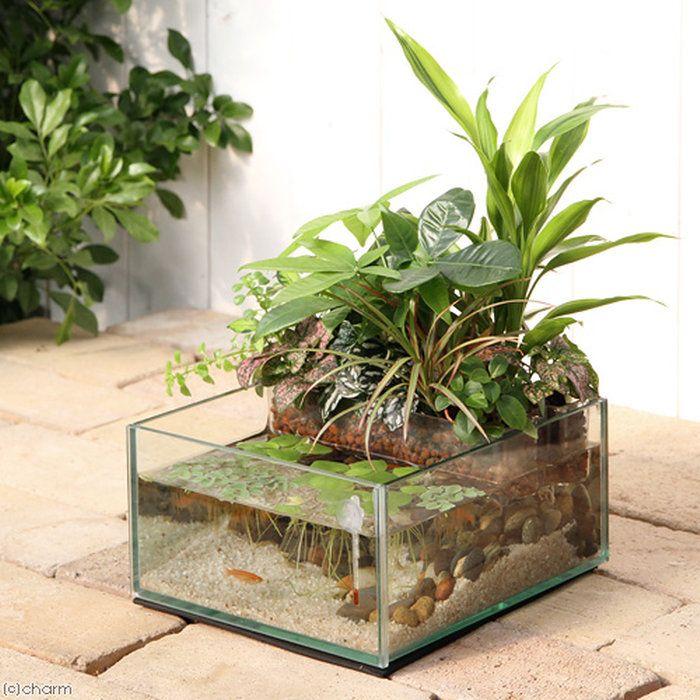 65 Philosophic Zen Garden Designs: メダカのプランツアクアGGN190楊貴妃メダカフルセット本州・四国限定メダカインテリア飼育セット
