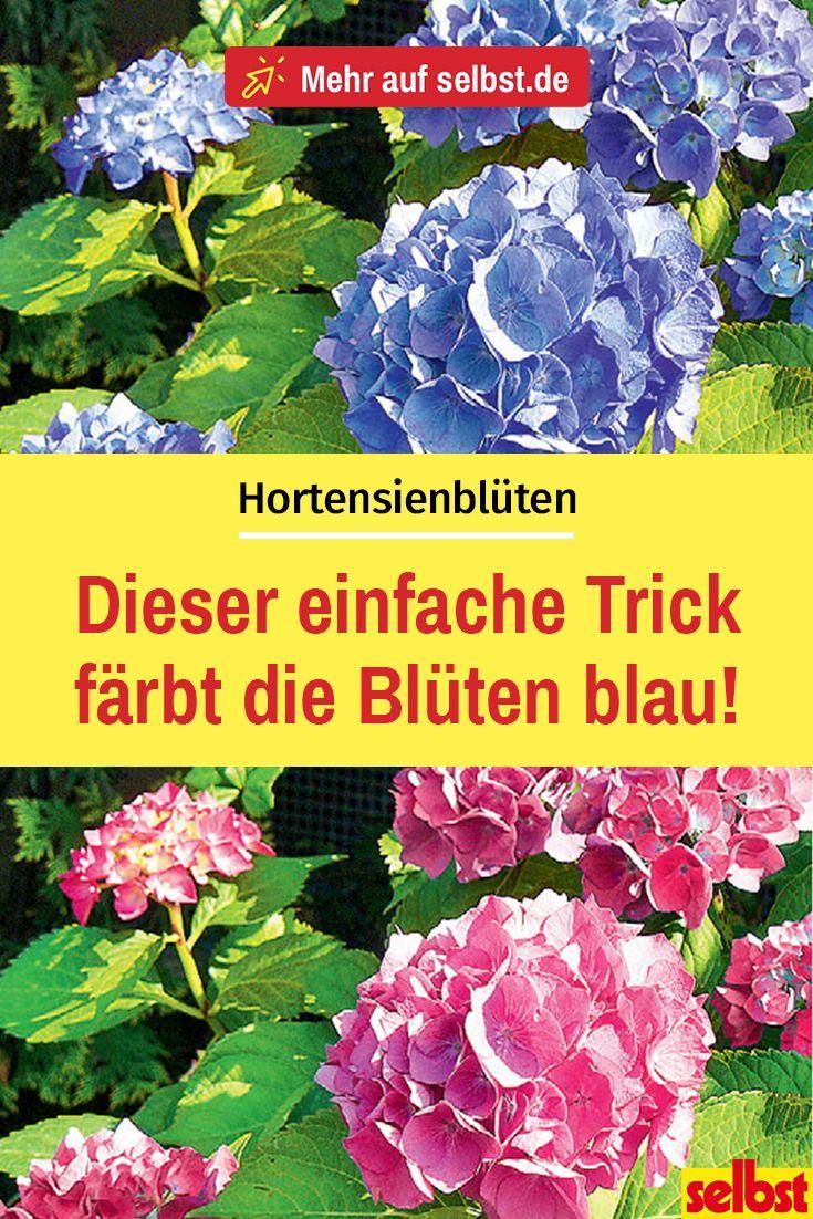 Hortensien-Blüten | selbst.de
