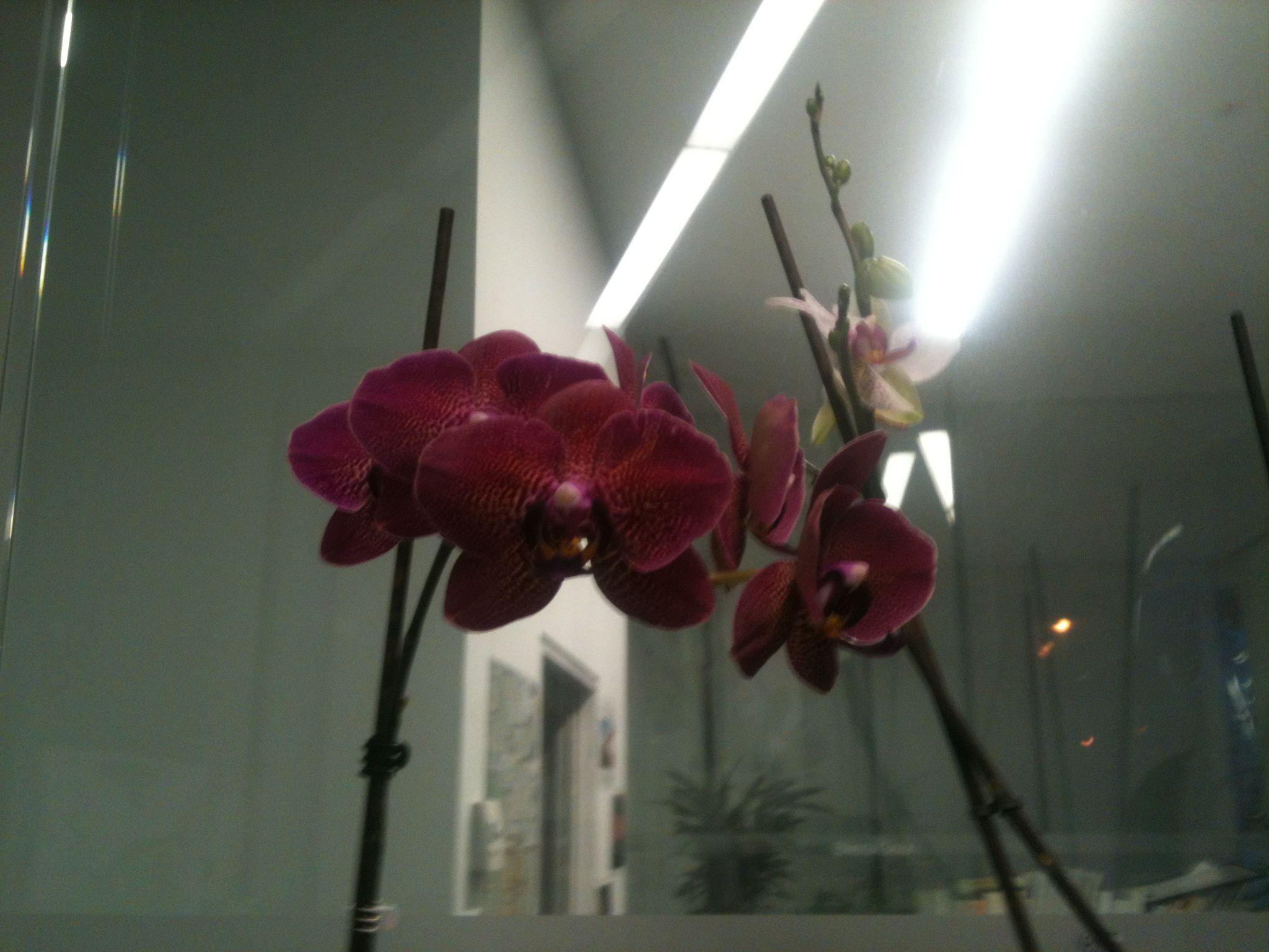 Orquídeas - primeras flores