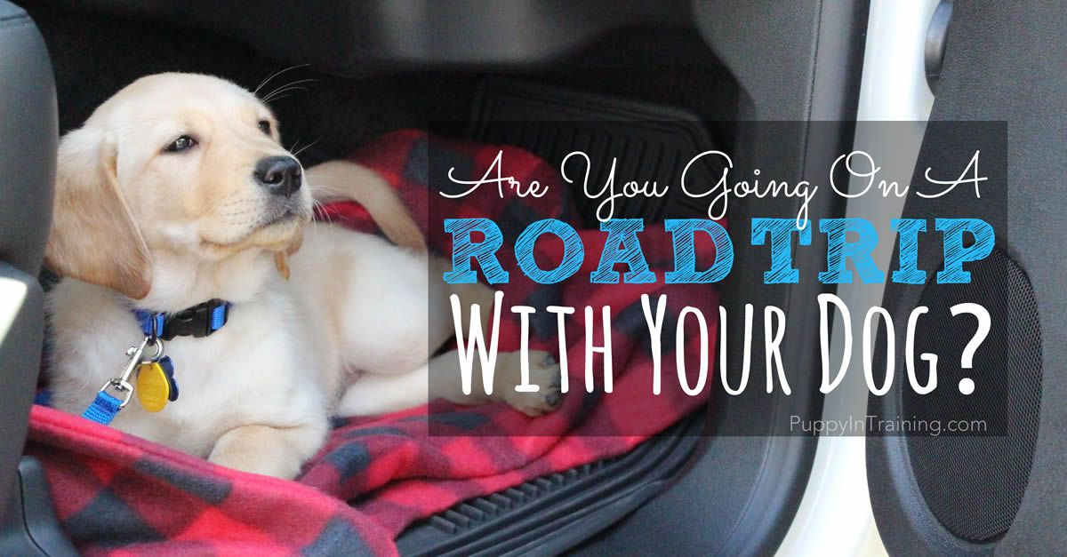 Are You Going On A Road Trip With Your Dog? [Dog Travel Checklist]