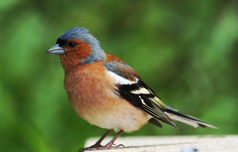 Птицы фото распечатать