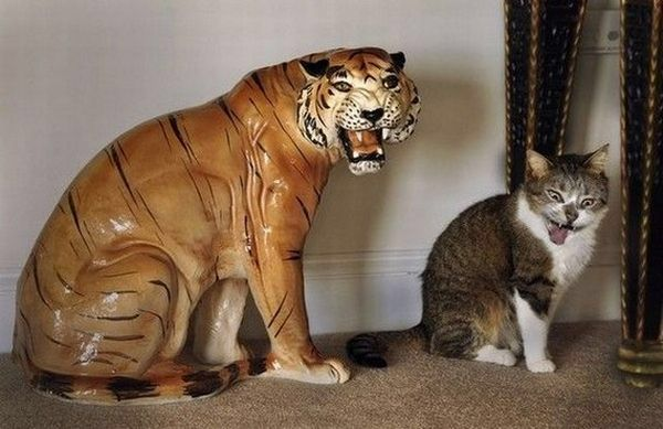 Cat tries to be a tiger statue to get out of seeing the vet.