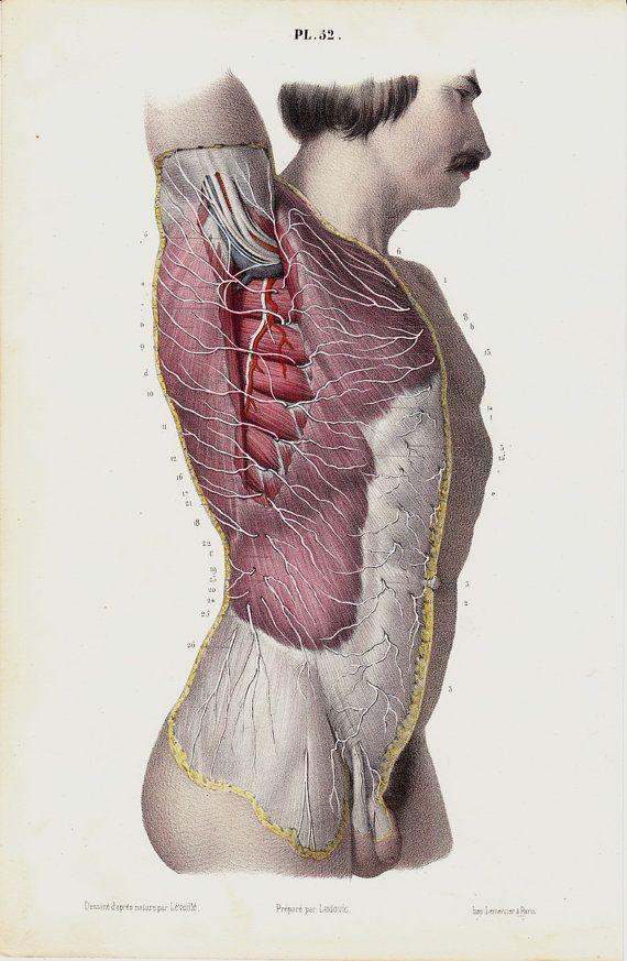 Antique print 1853 Antique ANATOMY print, fine anatomy lithograph ...