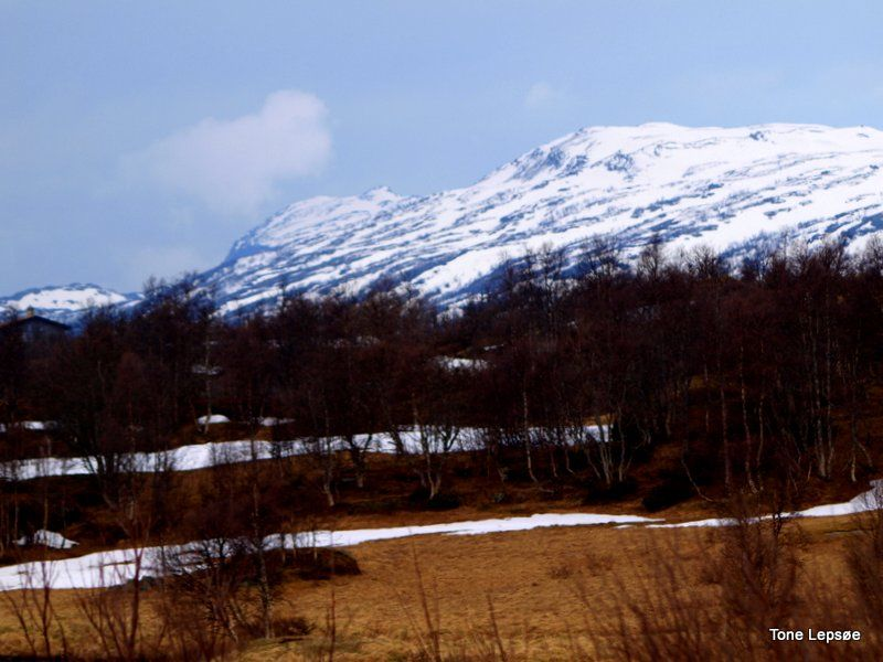 HARDANGERVIDDA, NORWAY. A TRIP WE HAD MAY 2012. TONE LEPSOES PICTURES.