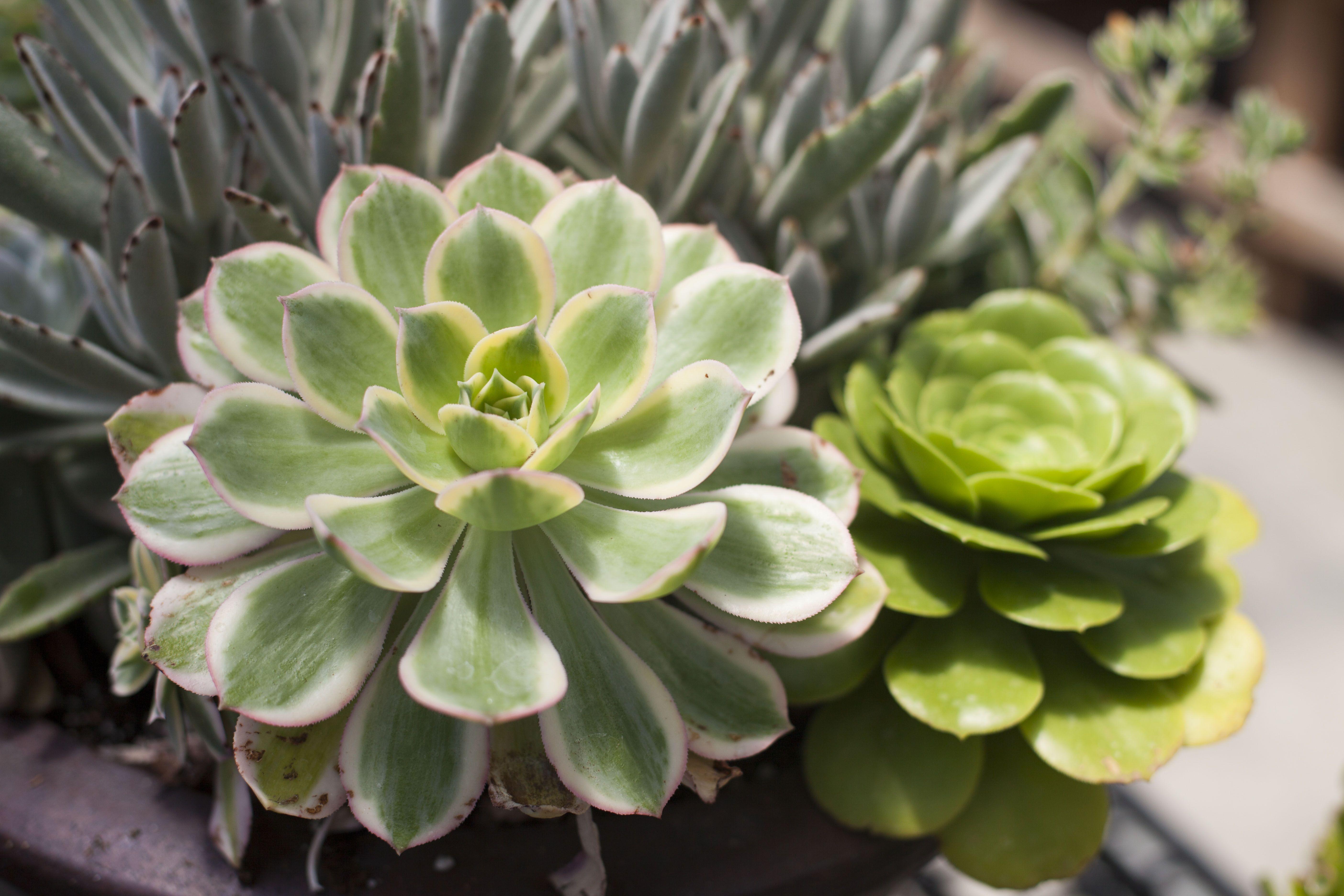Showcasing Drought Tolerant Plants