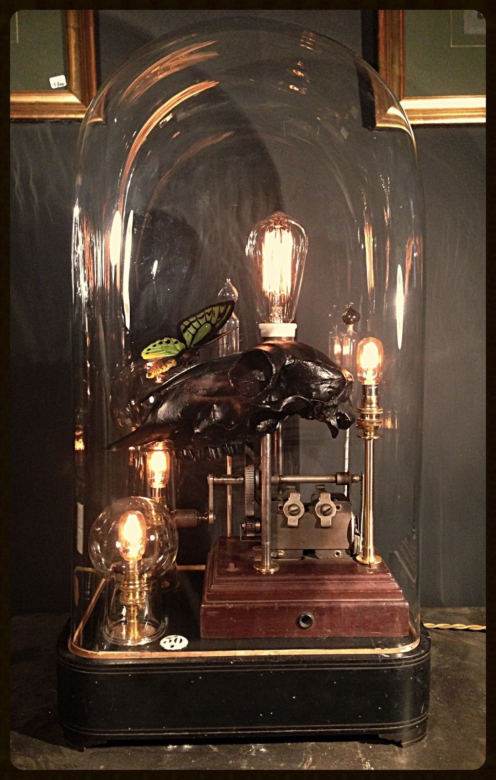 "Lampe Sous Cloche lampe ""curiosité"" n°30 | bell jars, display case and jar"
