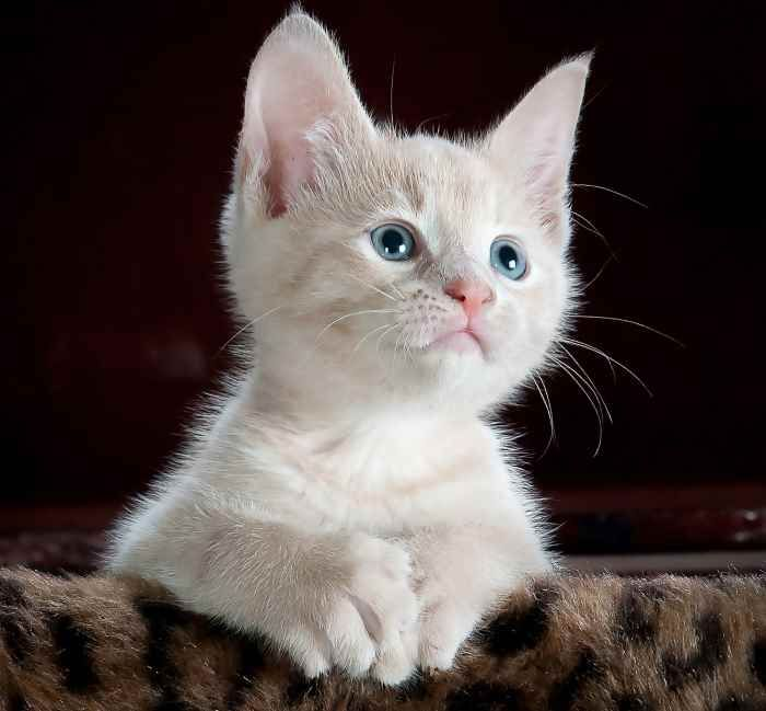 Adottare un gatto: come prendersi cura di un gattino http://www.brichome.it/adottare-un-gatto-come-prendersi-cura-di-un-gattino/