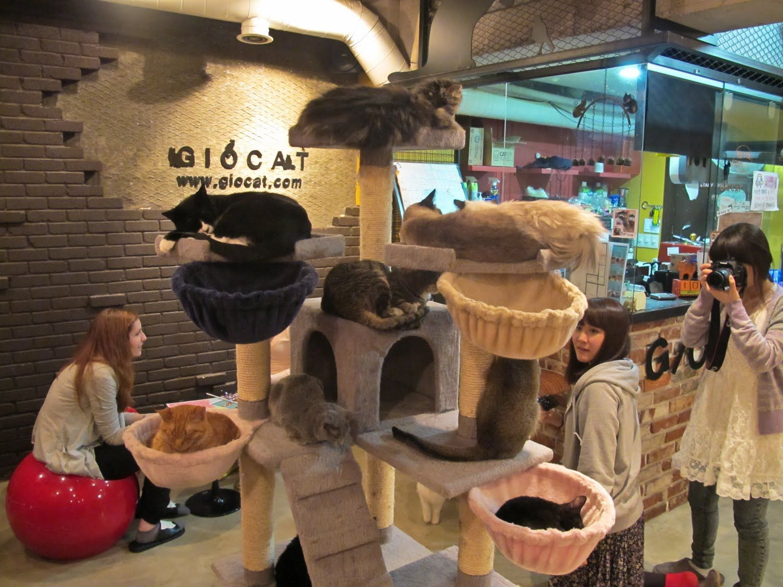 It has been well over ten years since the first cat cafe