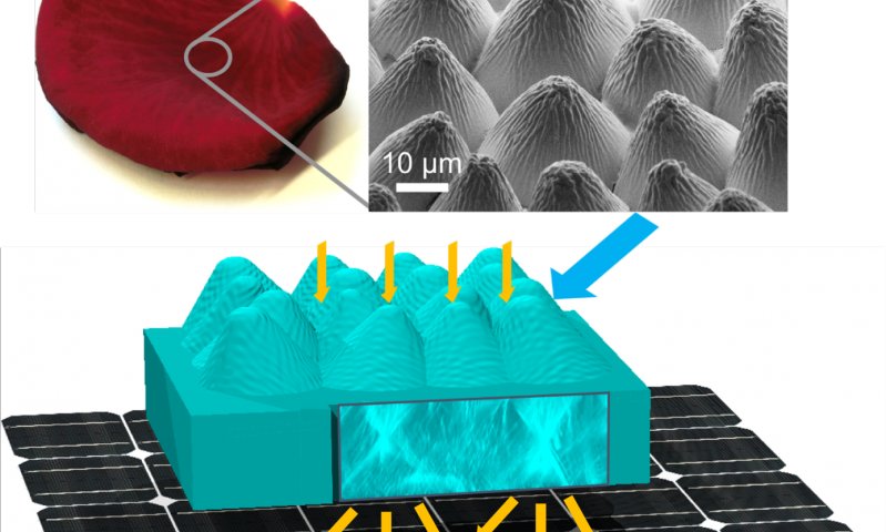 Flower Power Photovoltaic Cells Replicate Rose Petals Photovoltaic Cells Solar Cell Photovoltaic