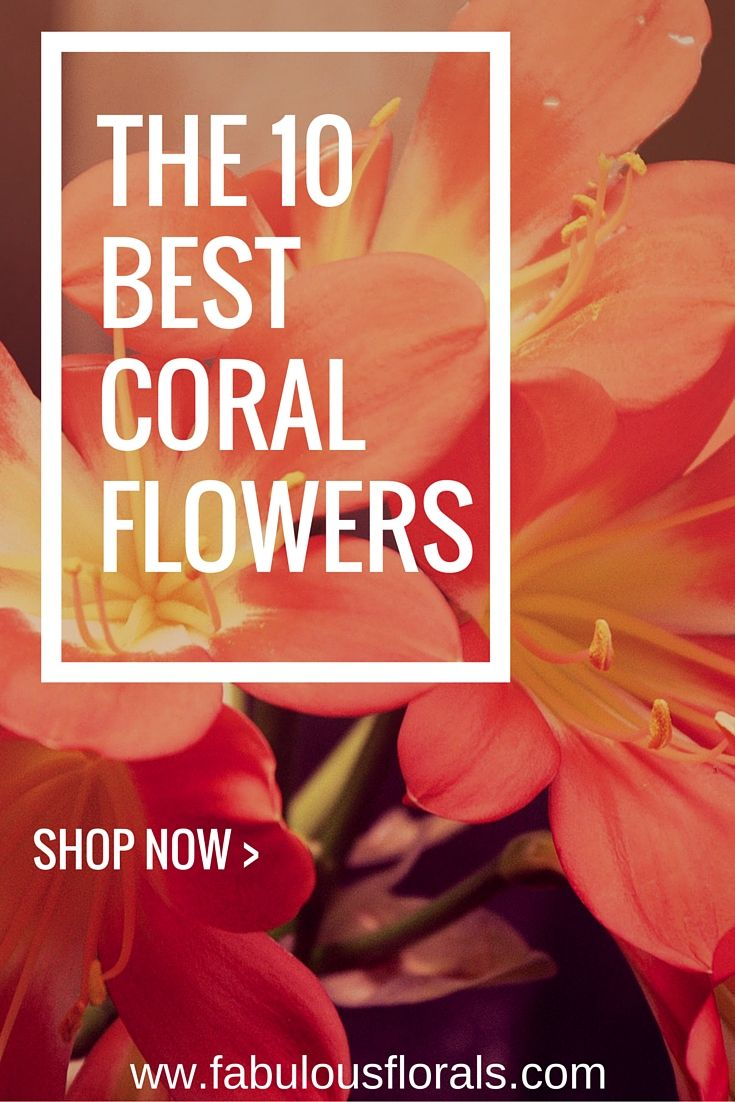 The DIY Brideus  resource for CORAL wedding flowers Buy Bulk