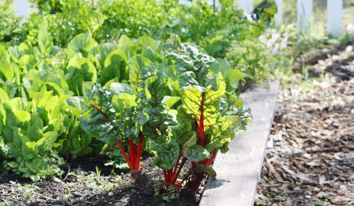 Indoor Vegetable Gardening Tips Appealing indoor vegetable and herb gardening and indoor vegetable appealing indoor vegetable and herb gardening and indoor vegetable garden design workwithnaturefo