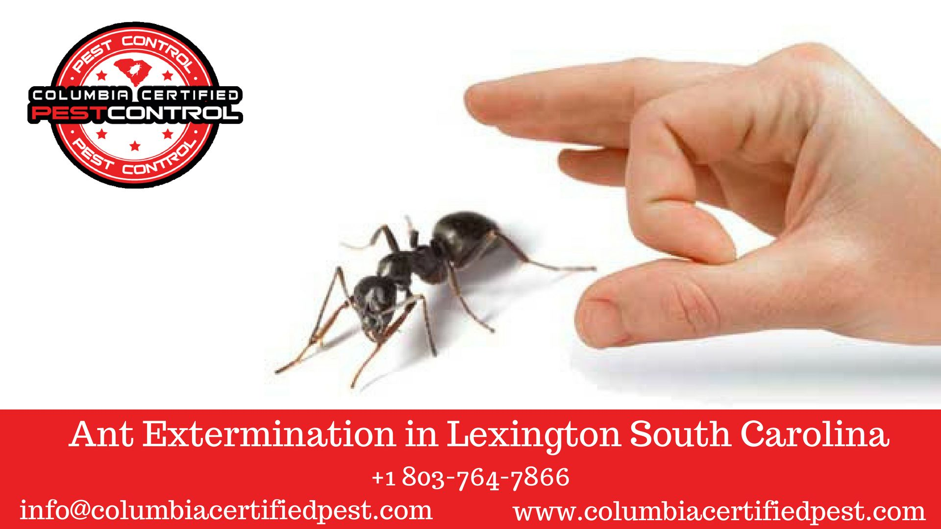 Ant Extermination In Lexington South Carolina Call 1 803 764 7866 Ant Pest Control Fire Ants Ants