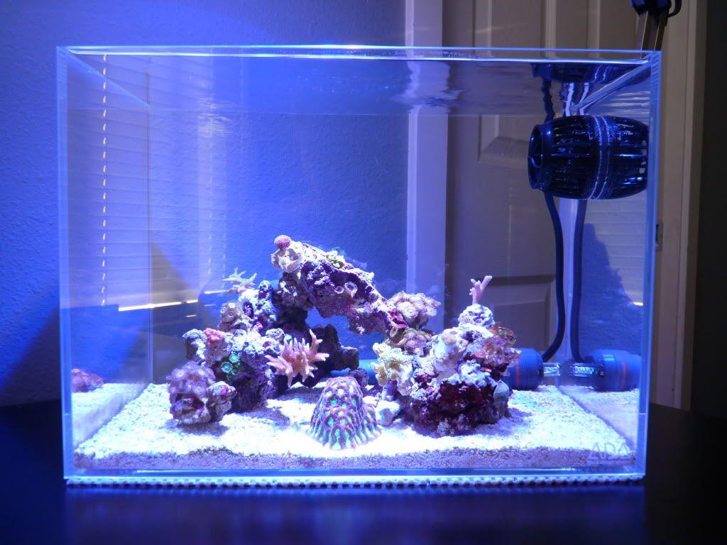 Minimalist Aquascaping Page 19 Reef Central Online Community Coral Reef Aquarium Aquascape Saltwater Aquarium