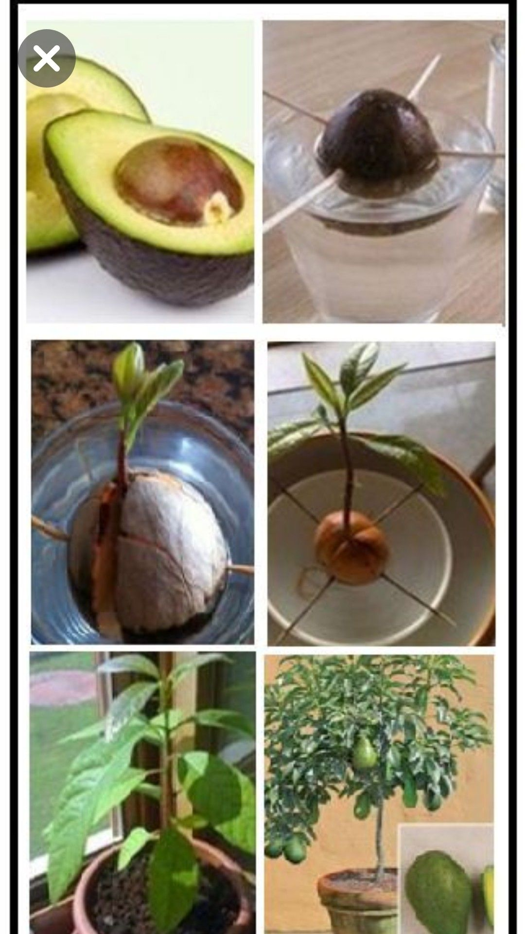Pin By Cira On Projects Plants Edible Garden Garden Lovers