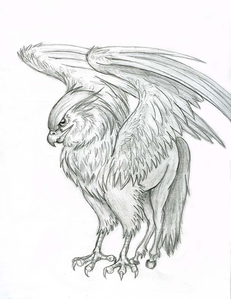 hippogriff | Hippogriff by ~Lizzy23 on deviantART
