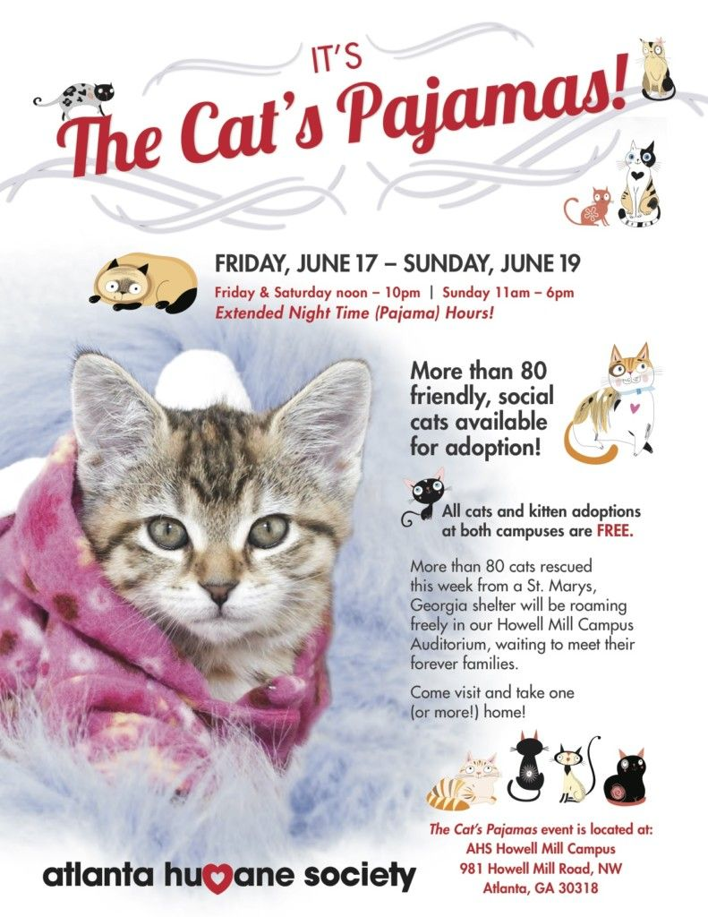 Cat Cam at the Atlanta Humane Society Cats Pinterest