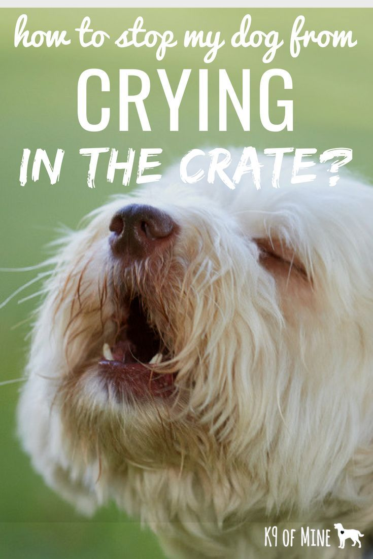 Help how do i stop my dog from crying in the crate with