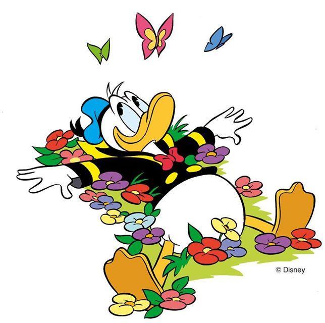 Donald duck i pinterest cartoni animati