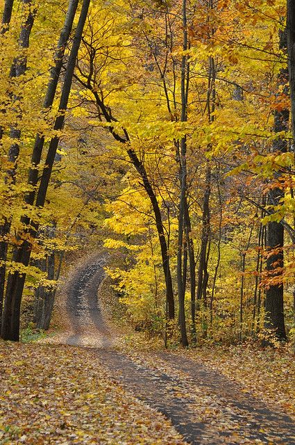 "mistymorningme: ""  The Best Part of Fall by Julie Falk Via Flickr: Hidden Lake Gardens """