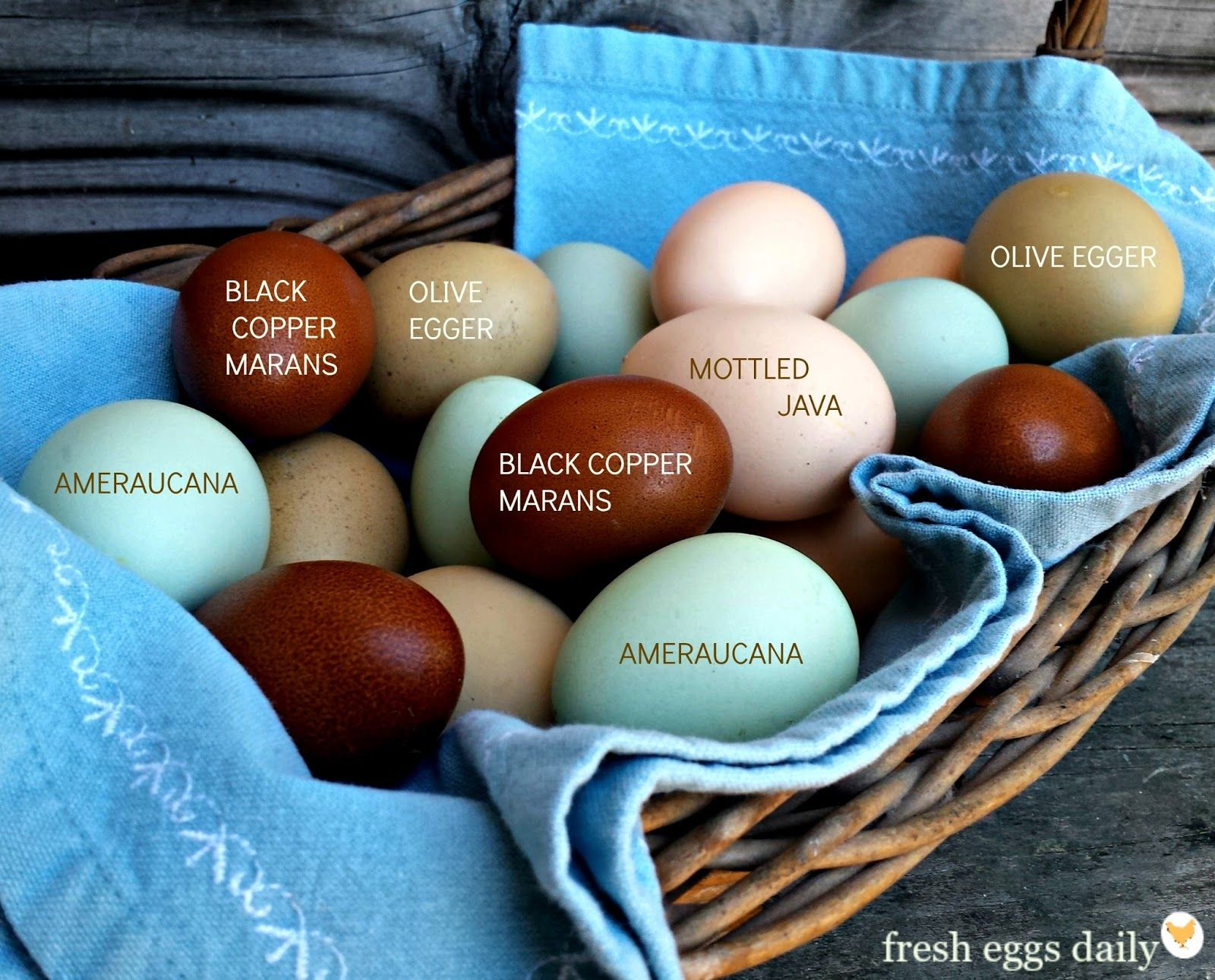 A rainbow of egg colors fresh eggs daily chickens egg colors