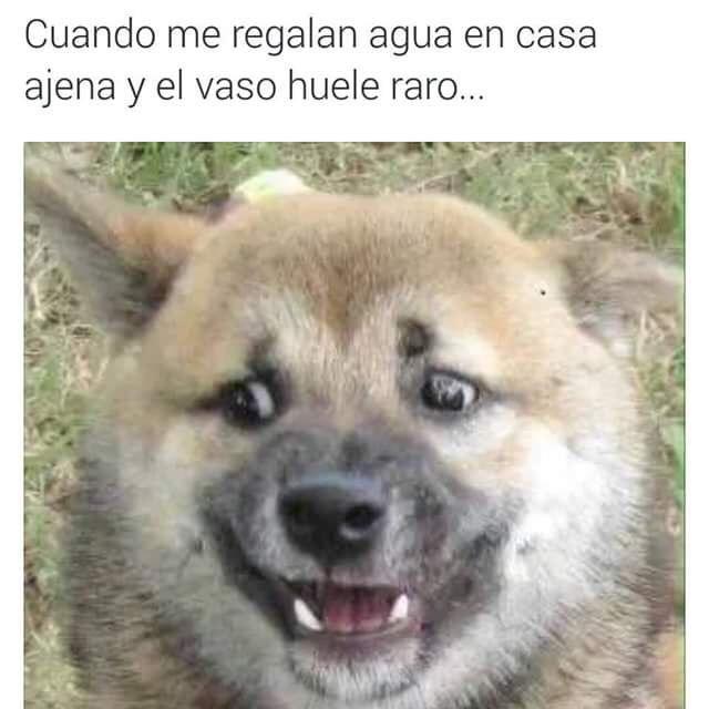 Pin De Gabriel Miranda En Memes 2 0 Chistez Imagenes Humoristicas Memes Animales
